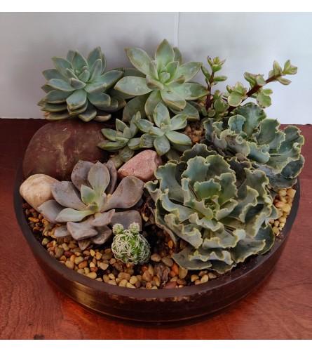 Garden Succulent's