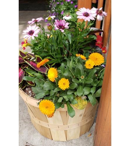 1/2 Bushel Annual Basket