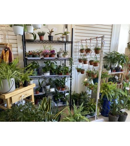 Designers choice green plants
