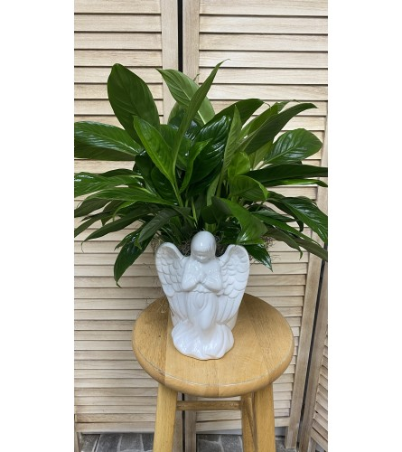 ANGEL PEACE LILY PLANTER