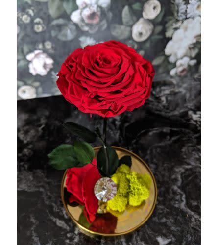 B E L L E   Luxe Preserved Rose