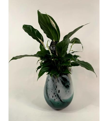 PEACE LILY IN BLOWN GLASS