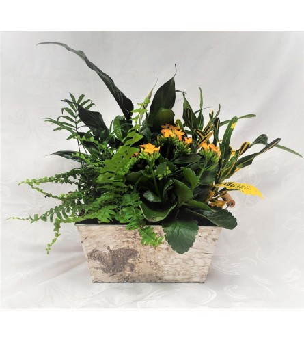 Traditional Tropical Planter
