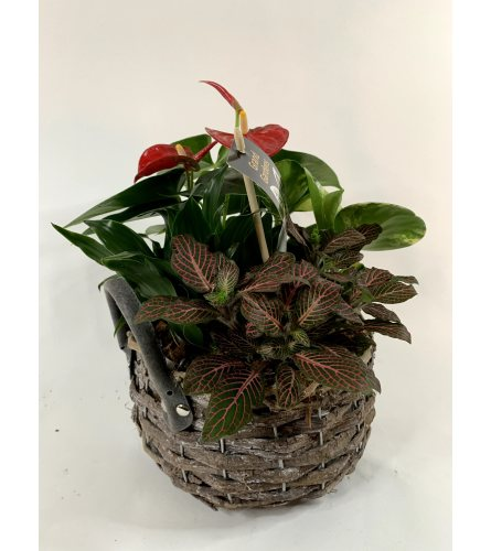Our mixed basket planter