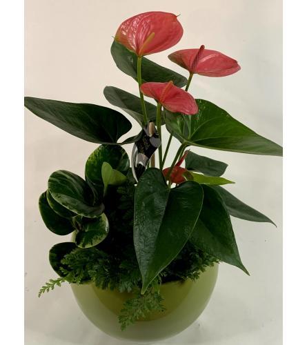 Our Mixed Ceramic Planter