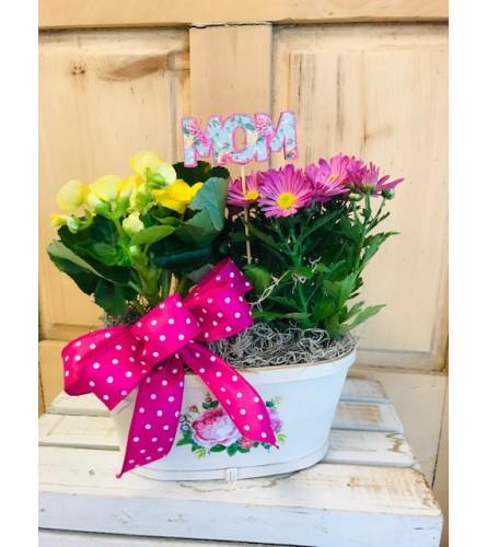 Flowering Dish Garden for Mom