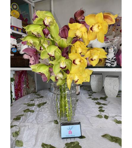 Sonia's Cymbidium Orchids