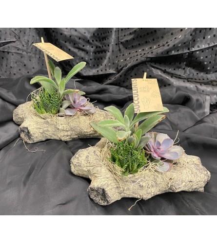 Stone Succulent Planter