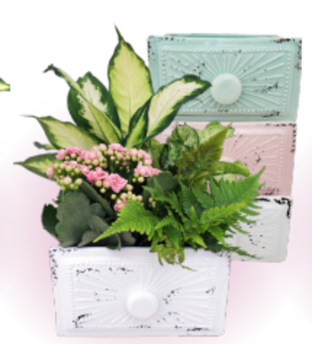 """7"""" Mother of Pearl Ceramic Drawer Planter Assorted"""