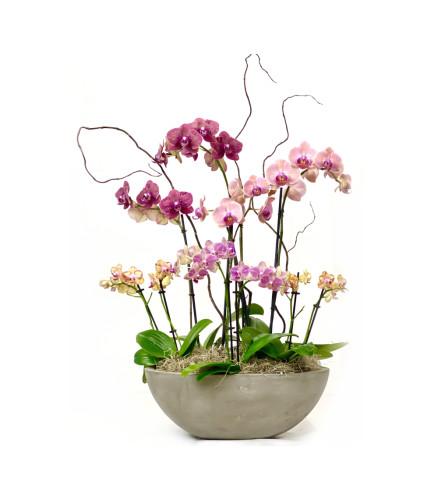 Opulent Orchid Garden
