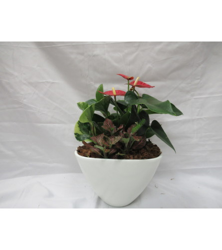 Small Anthurium mixed Planter