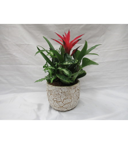 Crackle Planter with Bromeliad