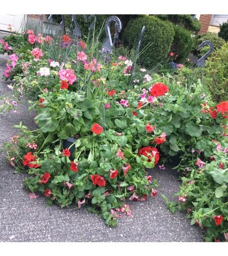Blooms outdoor