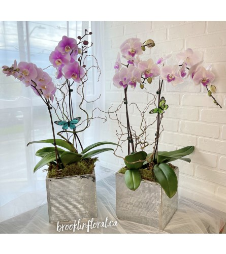 Modern Orchid Garden