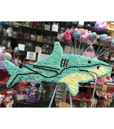 Shark Arrangement