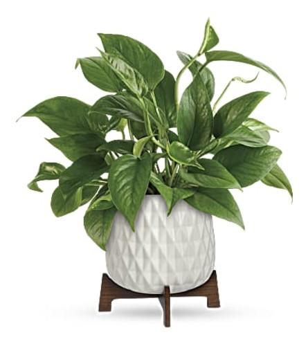 Lush Green Plant in ceramic planter