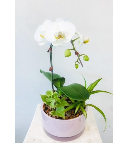 Glorious- Small Orchid Arrangement