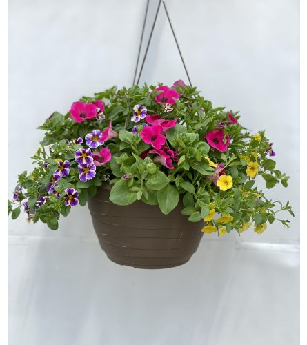 "10"" FLORIST CHOICE SEASONAL HANGING BASKET"