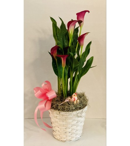 Calla Lily Towers