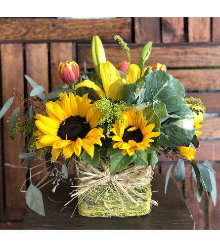 Sunflower Delight 2021