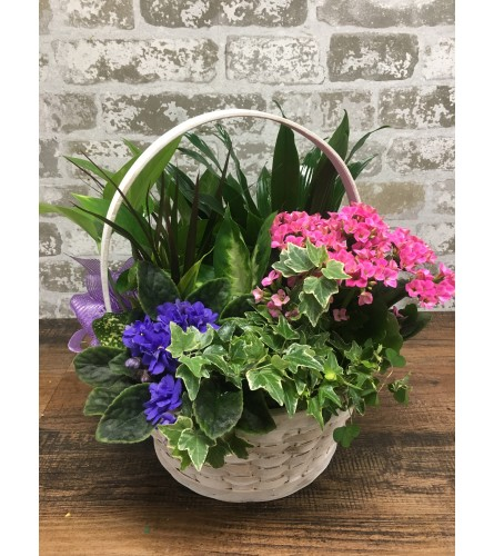 Plant Basket Special #2