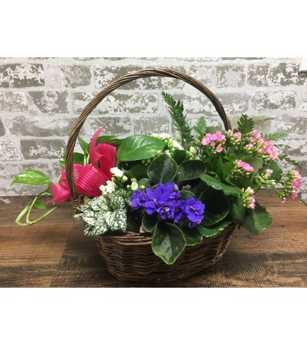 Plant Basket Special Deluxe