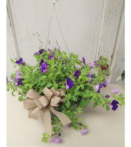 """10"""" Hanging Basket Petunia"""