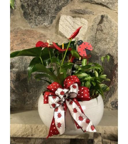 Blooming Dish Garden in Ceramic