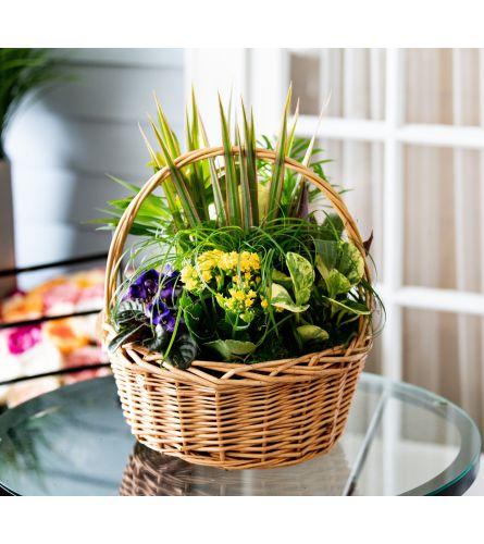 Basket Full of Lush Plants