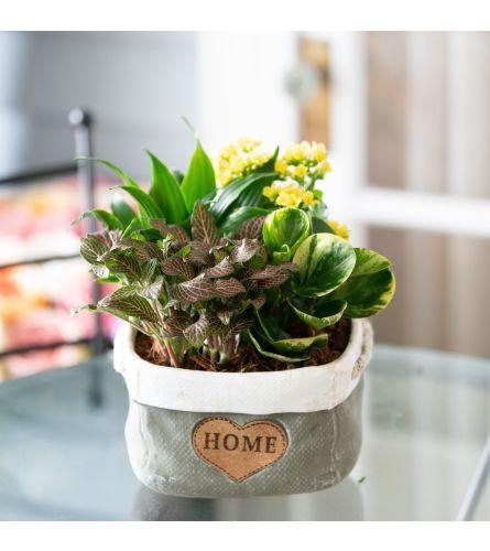 Blooming Planter