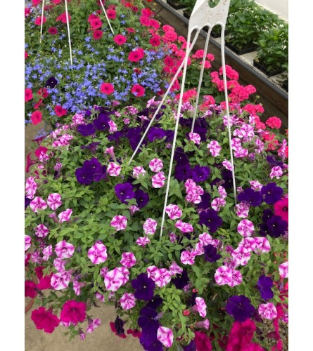 MOTHER'S DAY HANGING BASKETS