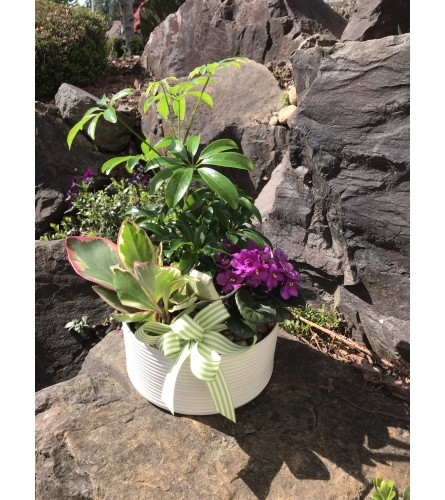 Dishgarden with violet in Ceramic Planter
