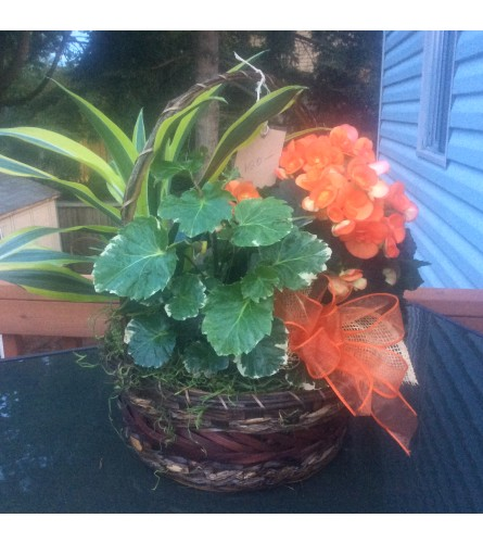 European Plant Basket with Blooming plant