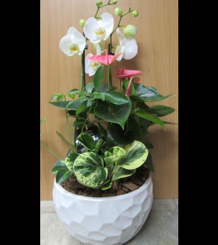 Orchid planter in ceramic