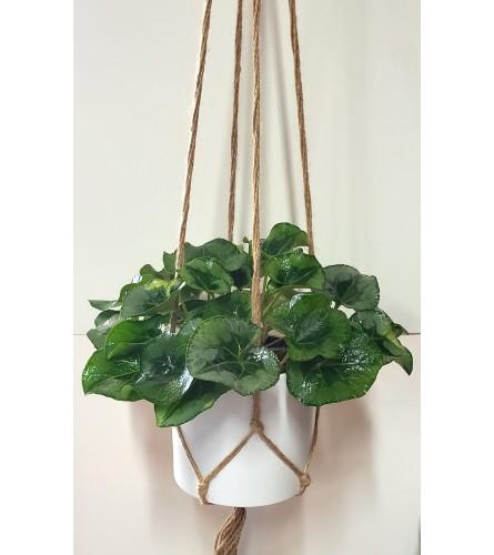 Natural Macrame Hanging Plant