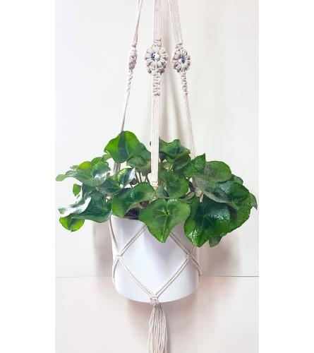 Cotton Macrame Hanging Plant