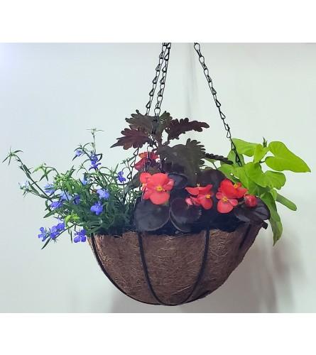 """8"""" Blooming Outdoor Summer Hanging Basket"""