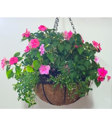 """8"""" Summer Outdoor Blooming Hanging Basket"""