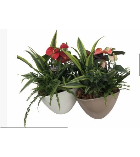 Ceramic tropical dish garden