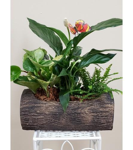 Tropical Delight Mixed Plants
