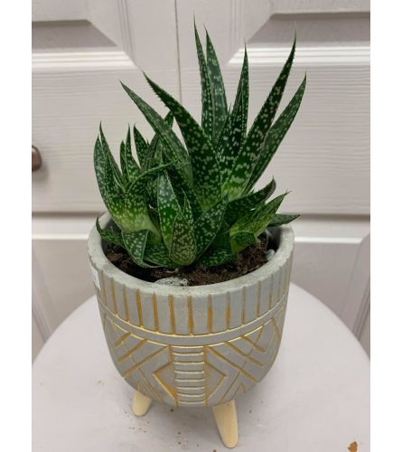 Green Planter with Legs