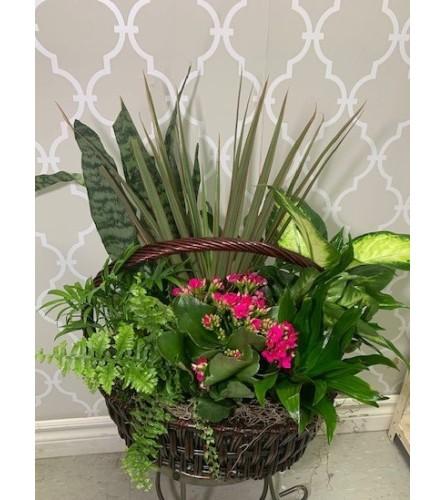 Snake plant & Green Garden in a Basket