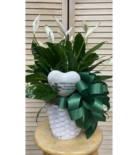 GOLDEN HEART PEACE LILY
