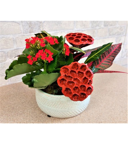 Red mood plant