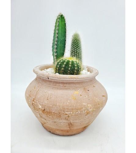 Terra Cotta Cactus Garden