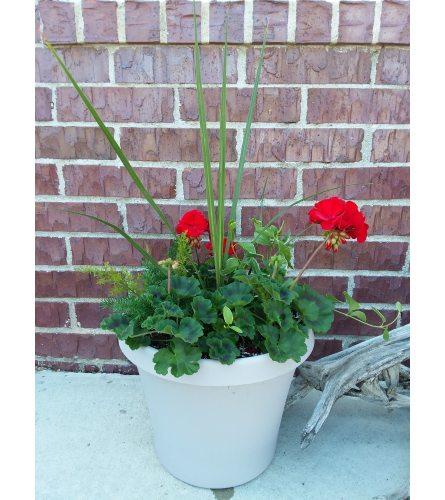 Greenhouse Geranium Planter