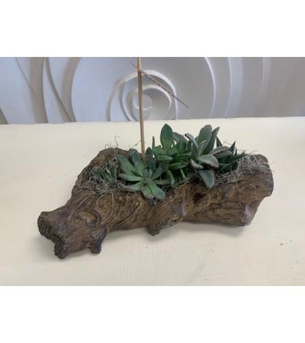 Unique Succulent Log Planter