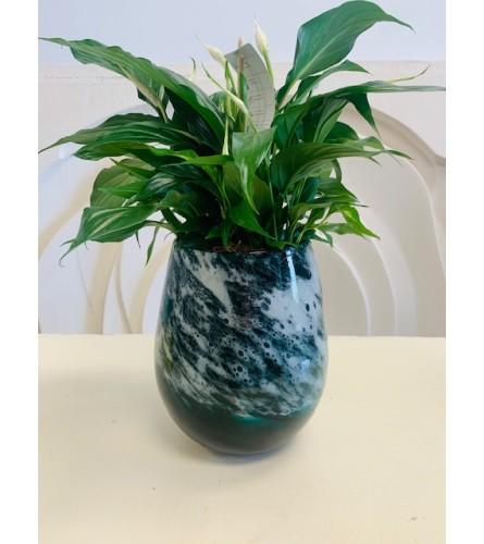 Peace Lily Glass Planter