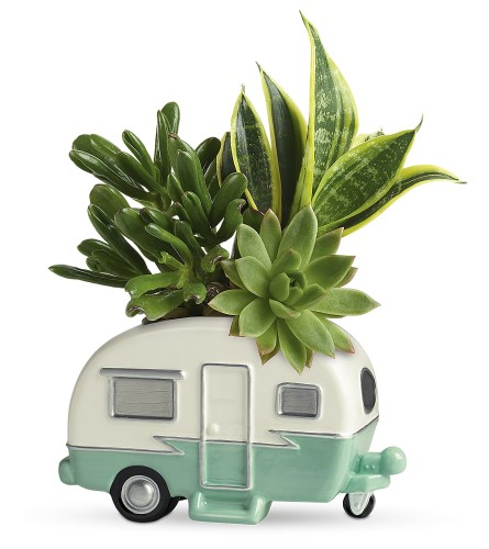 Cool Camper Succulent Garden (Teleflora)