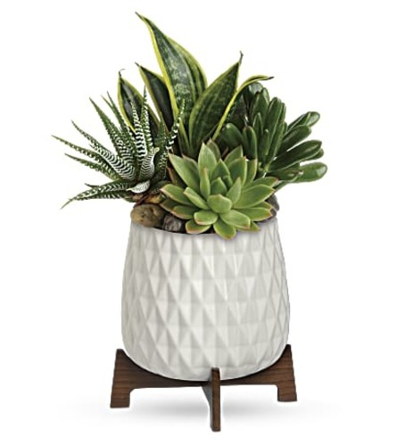 Styled Mood Succulent